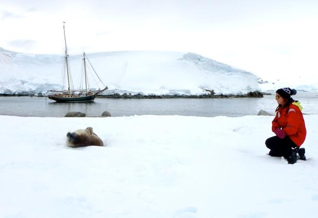 Antarctica, 2014